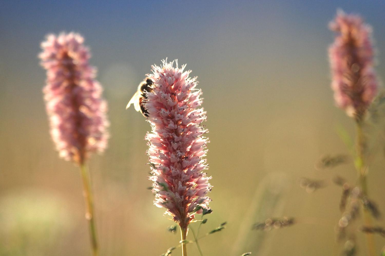 fiori-sfondo